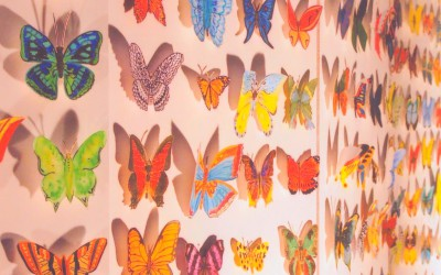 Expo «Les Papillons»
